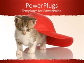 PowerPlugs: PowerPoint template with white and red background with cat under red face cap