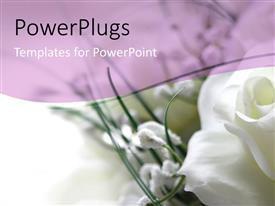 PowerPlugs: PowerPoint template with white rose in the corner with white and light purple background