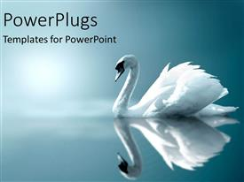 PowerPlugs: PowerPoint template with white swan as a metaphor on still lake cloudy misty on blue background