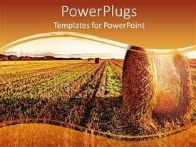 PowerPlugs: PowerPoint template with a wide wheat field showing a roll over a clear sunset sky