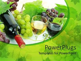 PowerPoint template displaying wine bottle, glass of white wine and glass of red wine, grapes and grape leaves, vines of grapes on white and green background