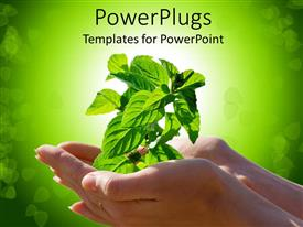 PowerPoint template displaying woman hand holding a plant symbolizing nature, growth and health on green background