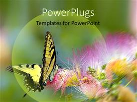 PowerPlugs: PowerPoint template with yellow and black butterfly landing on purple flower with green background, insects