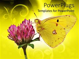 PowerPlugs: PowerPoint template with yellow butterfly on clover flower, butterfly sucking nectar from pink flower