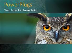 PowerPlugs: PowerPoint template with yellow colored owl eyes gazing on a blue background