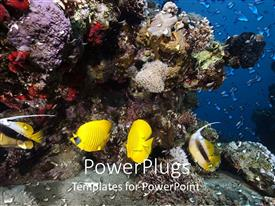 PowerPlugs: PowerPoint template with yellow fish swimming in front of coral reef, ocean