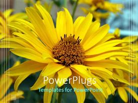 PowerPlugs: PowerPoint template with yellow flower in floral garden, nature