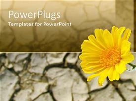 PowerPoint template displaying yellow flower, sunflower, cracked soil, desert, arid terrain background