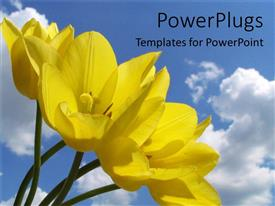 PowerPlugs: PowerPoint template with yellow flowers in field blue skies spring time nature environment