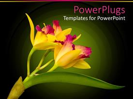 PowerPoint template displaying yellow orchid close up with green leaf in green background