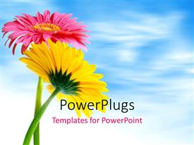 PowerPlugs: PowerPoint template with yellow and red Gerber flowers over blue cloudy sky in background