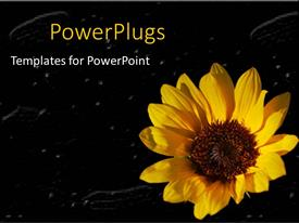 PowerPlugs: PowerPoint template with yellow sunflower close up in black background with white particles