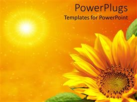 PowerPlugs: PowerPoint template with yellow sunflower with green leaves in bottom right corner with sun in top left corner on orange background