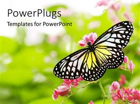 PowerPlugs: PowerPoint template with yellow, white, black butterfly landing on pink flowers