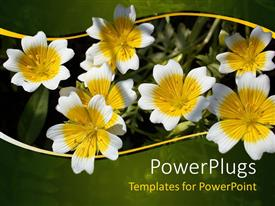 PowerPlugs: PowerPoint template with yellow and white flowers with green and yellow wave border, nature, spring