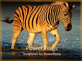 PowerPoint template displaying a zebra crossing a river with place for text in front