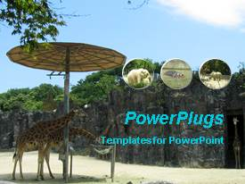 PowerPoint template displaying the zoo in the background with place for text